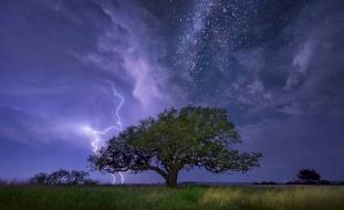 فيديو.. ماذا يحدث للشجرة إذا ضربتها صاعقة ؟