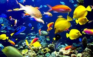 صورة سمكة في اليابان تحير الجميع: حقيقية أم فوتوشوب؟