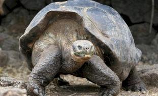 """الإكوادور.. إعادة عشرات السلاحف إلى موطنها بعد """"حجر صحي"""""""