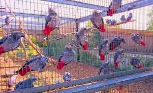 فيديو: حديقة حيوان تسجن ببغاوات اعتادت استقبال الزوار بالشتائم
