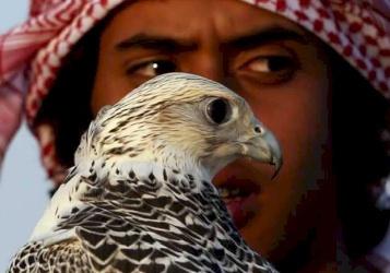 الكويت: بيع فرخ صقر بـ 72 ألف دولار