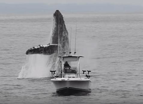 فيديو: مشهد مرعب لكائن بحري عملاق لا يمكنك تخيله