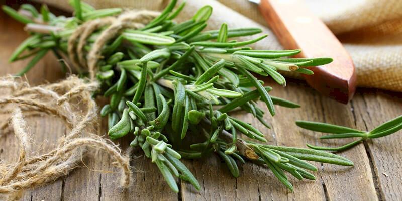 علاج الكلى بالأعشاب الطبيعية