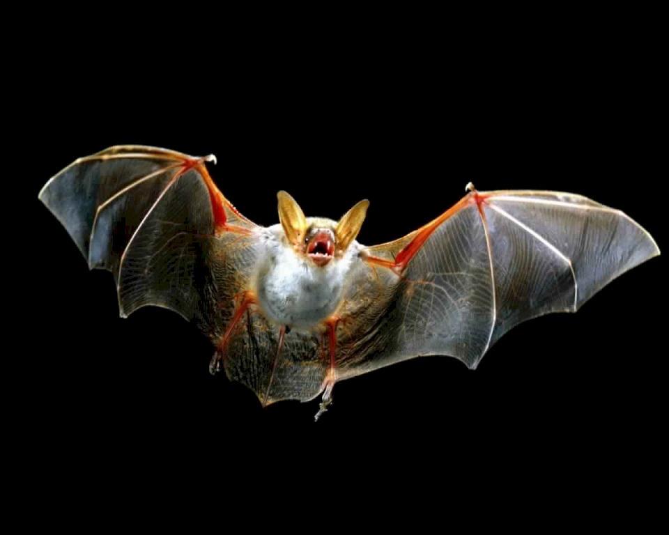 بعد انتشار كورونا- ما حكم الإسلام في أكل لحم الخفاش؟