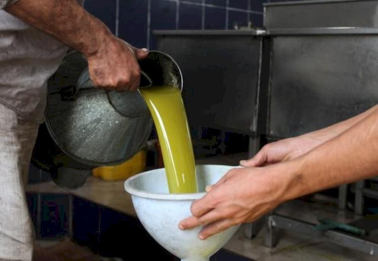 لأول مرة.. غزة تصدر زيت زيتون إلى دول خليجية